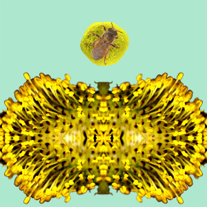 Willow Bee PPT